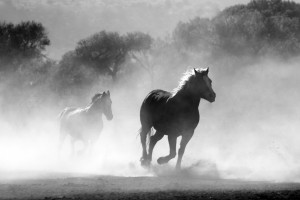 horse-430441_1920 (1)